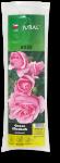 Balená růže keřová polyant - Rumba