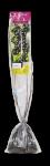 Balený ovocný keř - keřový rybíz červený Jonkheer Van Tets