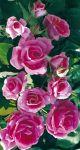 Balená růže keřová - Jackaranda