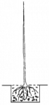 Balený stromek - ořešák Mars